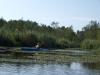 09 roślinność wodna porasta znaczną część jeziora