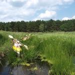 łąka w rzece przed Konotopem