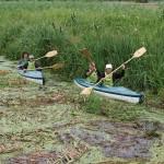 Obrzyca - zator roślinnosci wodnej przy mostku drewnianym w Ostrzycach