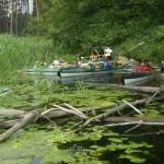 zwalone drzewa w wodzie kanału za Przetocznicą